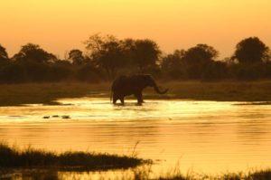 Safari sul fiume Olifants.