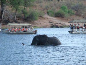 Safari in barca sul fiume Chobe