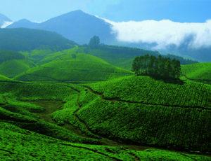 Munnar e le piantagioni di tè sulla catena dei Ghati Occidentali