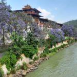 Lo splendido dzong di Punakha vestito di primavera!