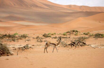 viaggio in namibia 2021