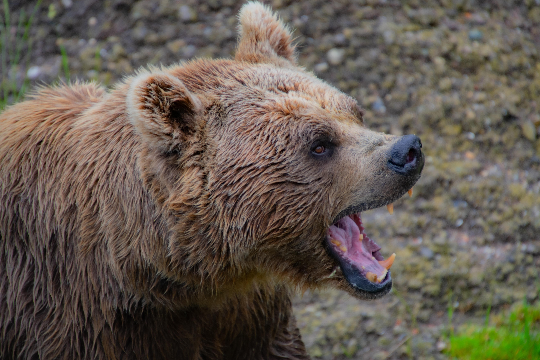 avvistamento orsi abruzzo