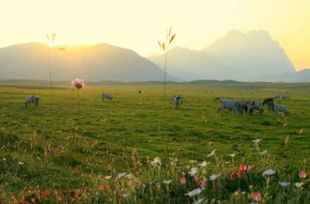 Valle con pascolo di mucche in abruzzo