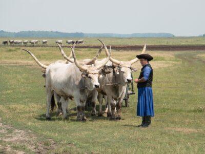vita quotidiana dei cowboy della Puszta di Hortobagy